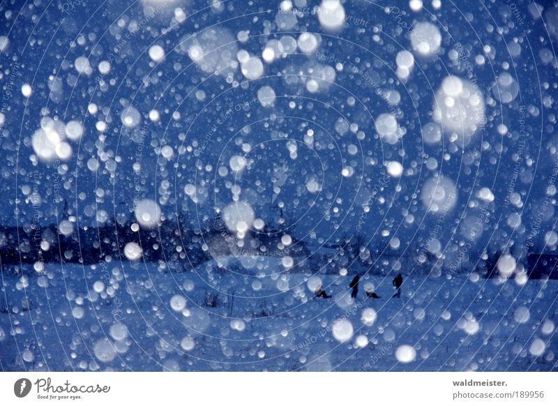 Menschen im Schneefall blau Landschaft Winter kalt Eis Lebensfreude Frost Unwetter schlechtes Wetter Klima Schlitten Gefühle
