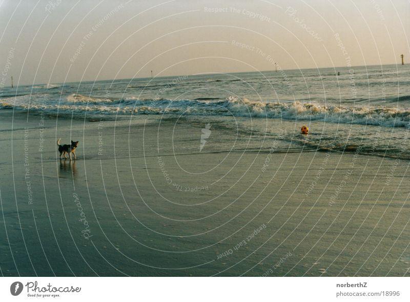 Hund ohne Ball Meer Macht des Wassers Trennung