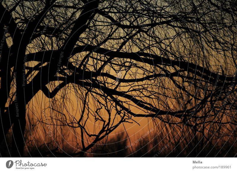 Abends Umwelt Natur Pflanze Himmel Sonnenaufgang Sonnenuntergang Klima Schönes Wetter Baum Ast Wald hängen Wachstum natürlich Stimmung ruhig Sehnsucht