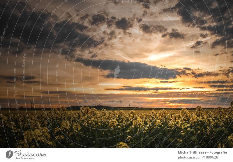 Sonnenuntergang über dem Rapsfeld Himmel Natur Pflanze blau Farbe grün Landschaft Wolken Ferne Umwelt gelb natürlich orange Horizont leuchten