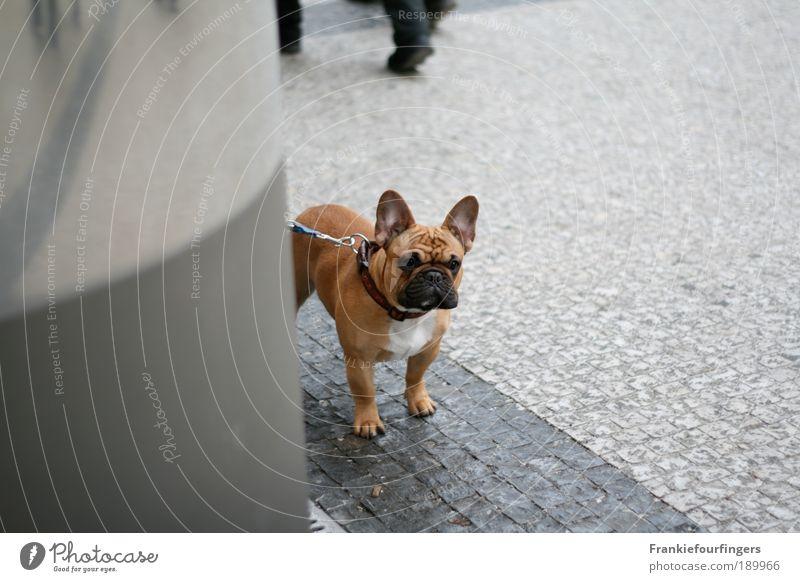 In der Warteschleife Hund warten Winter Hauptstadt Stadtzentrum Fußgänger Stufe 1 Stein beobachten denken frieren stehen Kühle Tierliebe Achtsam geduldig