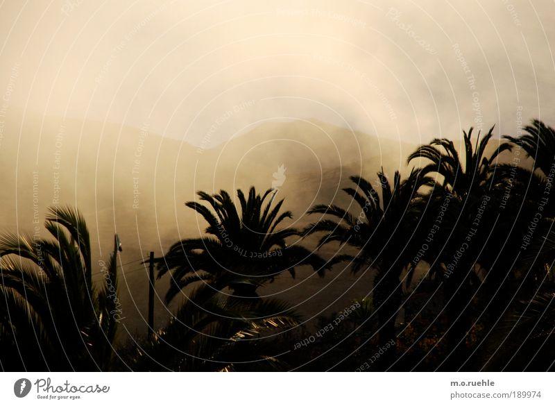 Wolkland Nebel gold Insel Romantik Klima Sehnsucht Hügel Palme exotisch Fernweh Grünpflanze Landschaftsformen Kanaren Palmenwedel Gomera Nebelschleier