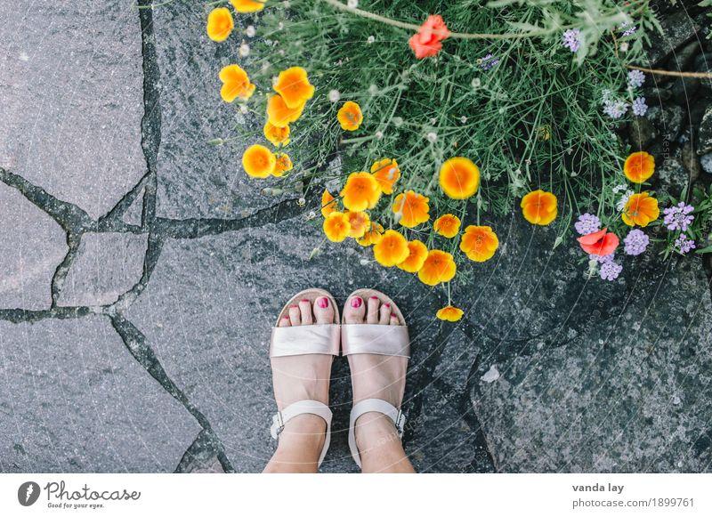 Warten auf den Sommer Lifestyle kaufen schön Pediküre feminin Junge Frau Jugendliche Erwachsene Fuß 1 Mensch 18-30 Jahre 30-45 Jahre Pflanze Blume Mode