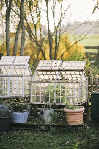 Garten Natur Pflanze Baum Blume Herbst Gras Wohnung Häusliches Leben Idylle Bioprodukte nachhaltig ökologisch Gartenarbeit Topf Selbstständigkeit