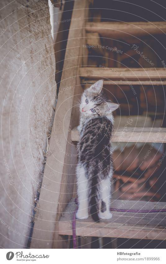 Hier bin ich Katze Natur Tier Tierjunges Treppe niedlich Bauernhof Haustier Tierliebe Zurückblicken
