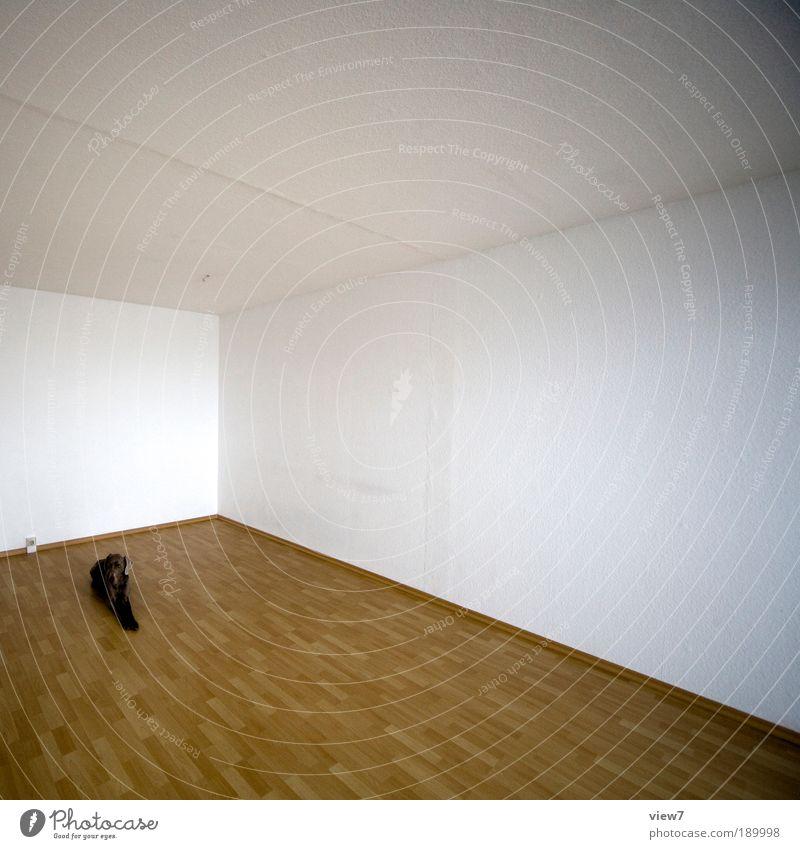 §8 Haustiere Tier Ferne Holz Hund Stein Linie braun Raum Wohnung elegant modern Ordnung ästhetisch Tierporträt authentisch einfach