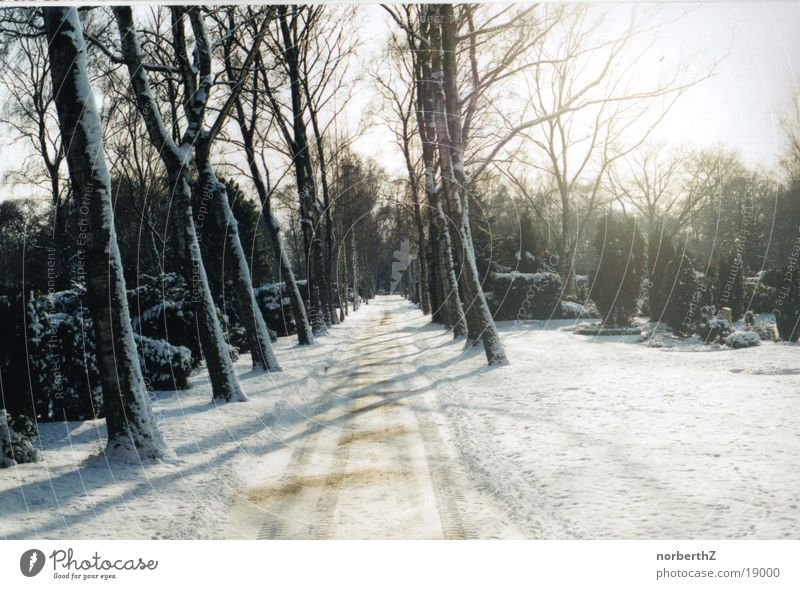 Waldweg Fußweg Friedhof Schnee Wege & Pfade