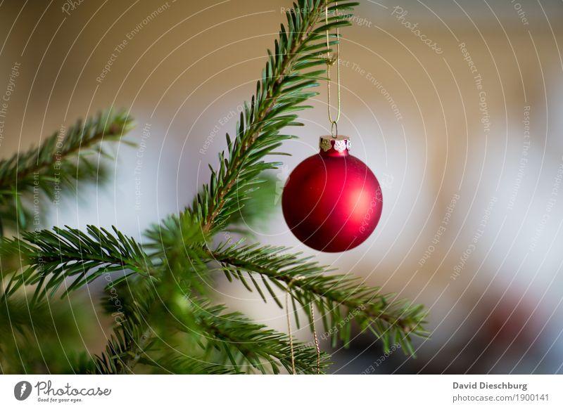 Last Christmas... Winter Pflanze Baum grün rot weiß Weihnachten & Advent Weihnachtsbaum Weihnachtsdekoration Christbaumkugel Querformat Ast Dezember Farbfoto