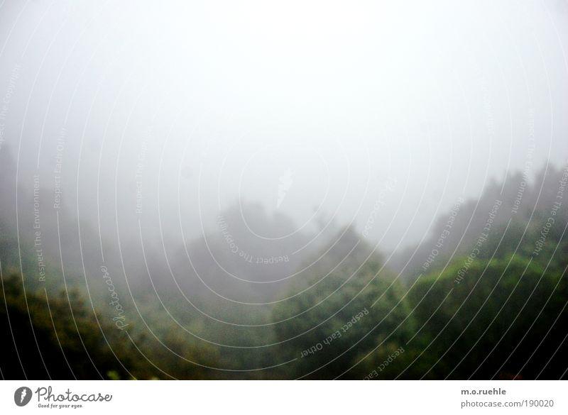 Fühlland II Himmel Natur grün Baum Wolken Einsamkeit Farbe Umwelt Landschaft Traurigkeit träumen Stimmung Wetter Nebel nass ästhetisch