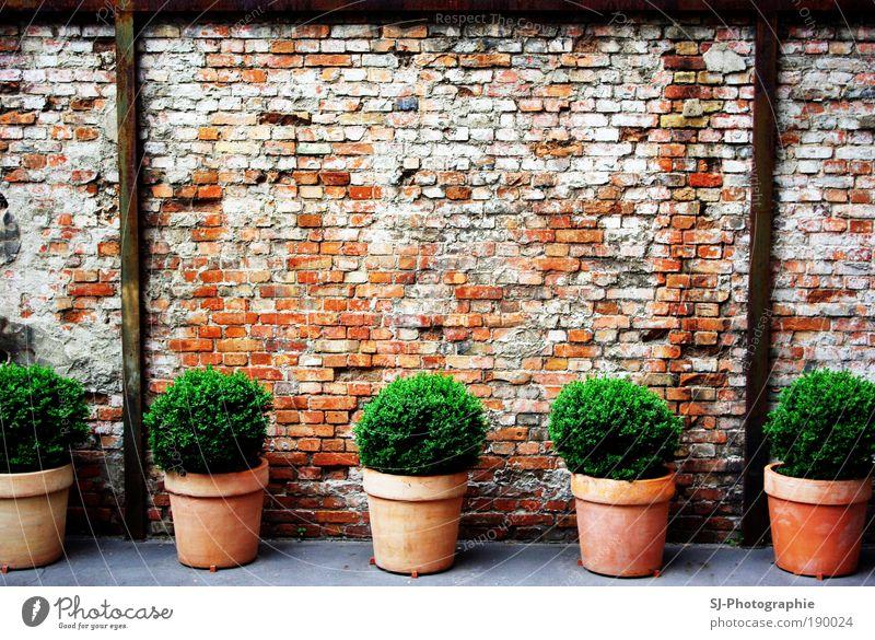Hinterhof in Berlin Pflanze Blatt Grünpflanze Menschenleer Ruine Mauer Wand Stein Beton bauen außergewöhnlich dreckig braun grau grün schwarz weiß Blumentopf