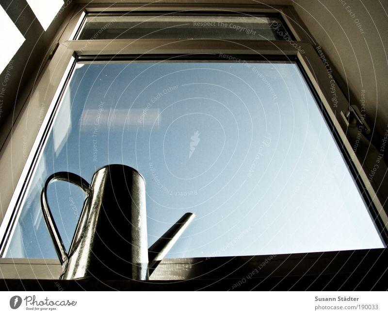 Schwarzer Daumen II Himmel Pflanze Einsamkeit Fenster Luft Metall Wohnung leer Wachstum Häusliches Leben Schönes Wetter Fensterscheibe Blauer Himmel Aluminium Glas Gießen