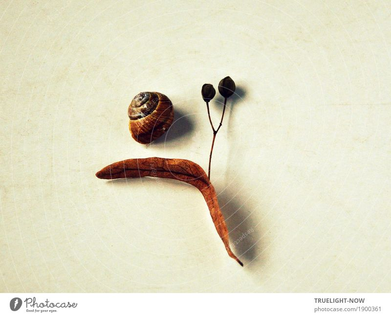 Tod und Wiedergeburt Natur Pflanze Tier Herbst Winter Blatt Lindenblütenblatt Holz Kristalle Zeichen Ornament Linie Spirale Samen Schneckenhaus alt ästhetisch
