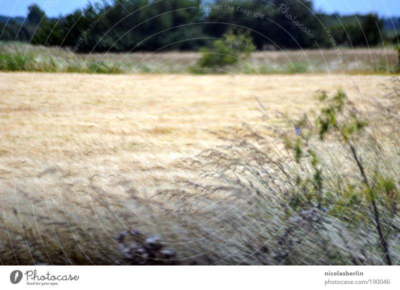 iwishicouldforget Natur Pflanze gelb Wiese Umwelt Landschaft Wege & Pfade Traurigkeit Horizont Wind Feld blond Erde Freizeit & Hobby natürlich frei