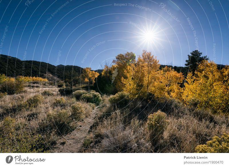Great Sand Dunes National Park, Colorado Himmel Ferien & Urlaub & Reisen Natur Sommer Pflanze Landschaft Sonne Baum Erholung ruhig Wald Ferne Herbst Umwelt