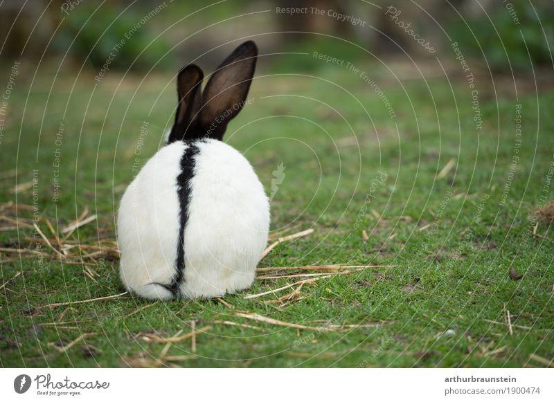 Kaninchen mit Stroh auf grüner Wiese Lebensmittel Fleisch Ernährung Bioprodukte Freizeit & Hobby Garten Küche Landwirtschaft Forstwirtschaft Gastronomie Umwelt
