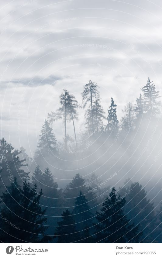 neulich im Himmel Baum blau Wolken Wald kalt Erholung Berge u. Gebirge Glück grau Landschaft Zufriedenheit Nebel Wetter Umwelt Horizont