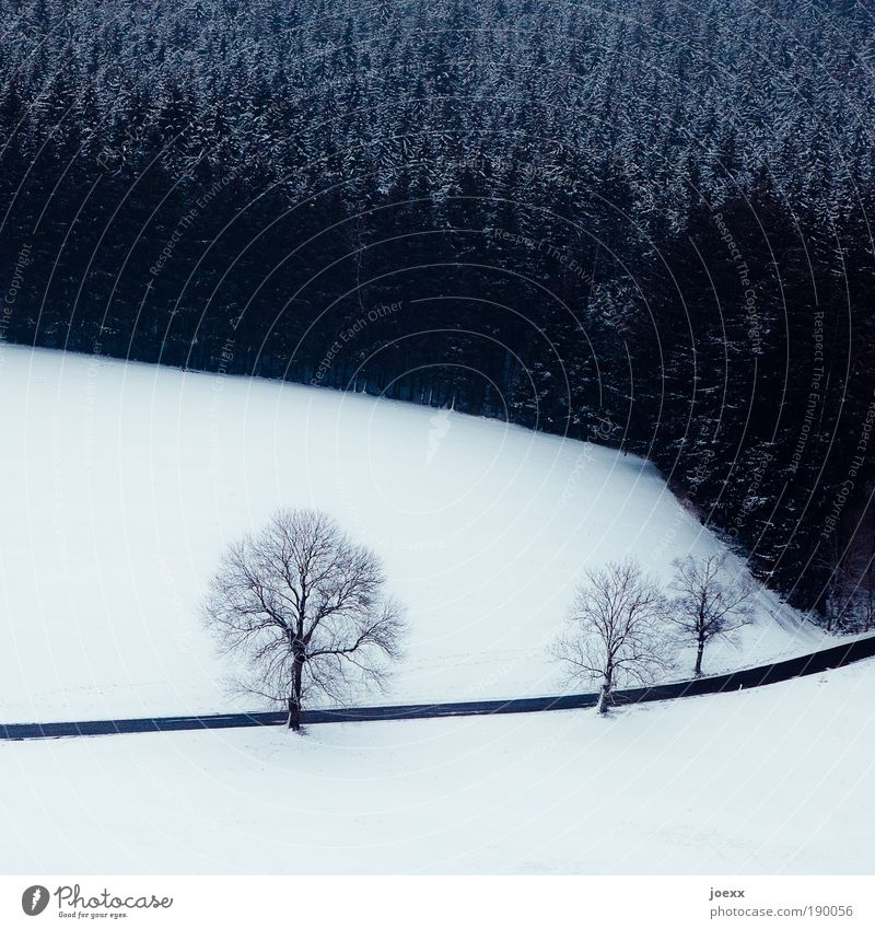 Oben Natur Baum Pflanze Winter Wald Straße kalt Schnee Landschaft Erde frei Luftverkehr Schweben Schwarzwald Nadelwald