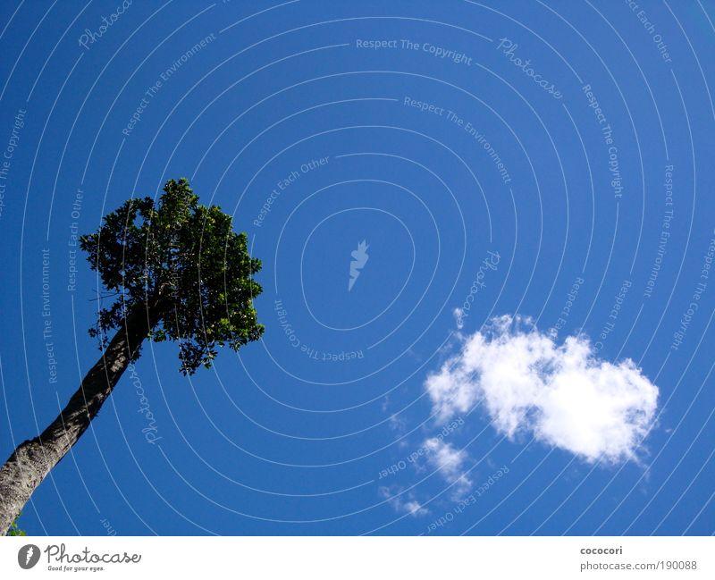 Baum und Wolke Himmel Natur Sommer Pflanze Wolken träumen Luft leuchten Blauer Himmel Australien Freiraum
