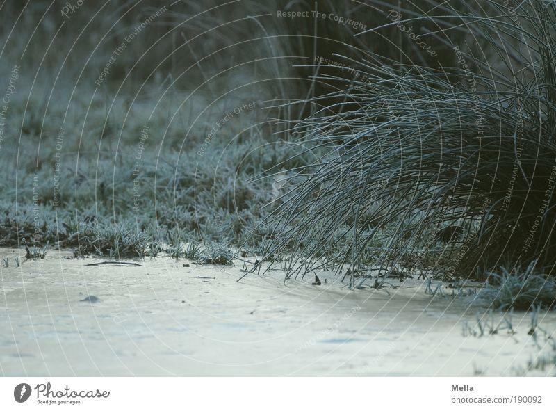 Dauerfrost Natur Pflanze Winter ruhig dunkel kalt Wiese Gras Wege & Pfade Landschaft Eis Stimmung Umwelt Erde Frost Klima