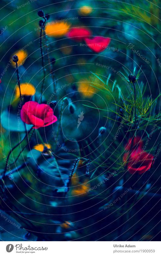 Wilder Mohn Stil Design einrichten Innenarchitektur Dekoration & Verzierung Tapete Bild Leinwand Poster Postkarte Natur Pflanze Sommer Blume Blatt Blüte