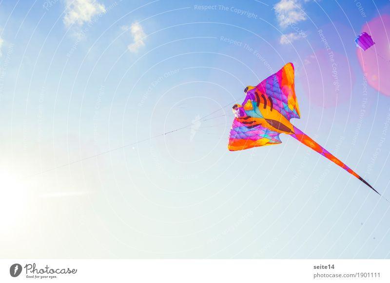 Drachen, Wind, Blauer Himmel, Textfreiraum, Kindheit Natur blau Sommer schön Sonne Lifestyle Herbst Hintergrundbild Glück Freiheit fliegen oben Freizeit & Hobby