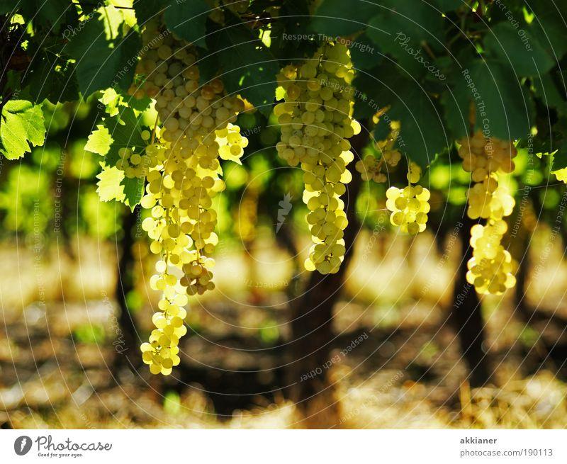 Wein Natur Pflanze Sommer Landschaft Blatt Umwelt Wärme Gesundheit hell Garten Luft Wetter Feld Erde Klima Schönes Wetter