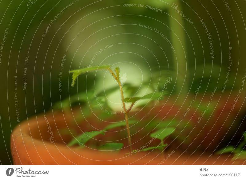 Gartenkindergarten Natur grün Pflanze Tier ruhig gelb Umwelt Landschaft klein Frühling Zufriedenheit Kraft Erde natürlich Klima Wachstum