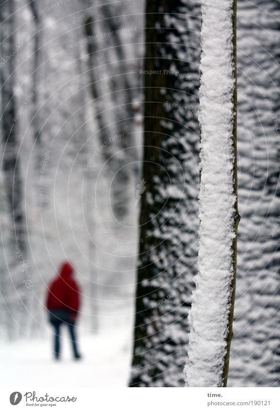 Moving. Sonst Friering. Ferne wandern Frau Erwachsene Baum Wald Wege & Pfade Jacke gehen laufen dunkel rot weiß Schnee Bäumchen Ast Tiefenschärfe Schneeflocke