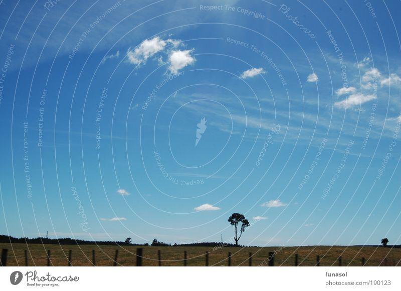 Einsamer Baum Umwelt Natur Landschaft Erde Luft Himmel Wolken Horizont Sonnenlicht Sommer Schönes Wetter Gras Wiese Neuseeland Skyline Menschenleer Ferne