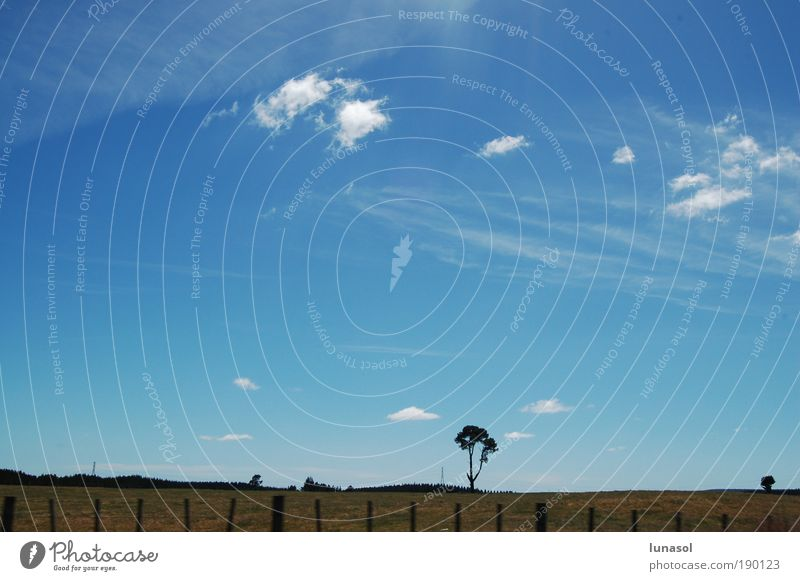 Himmel Natur blau grün Baum Sommer Wolken Ferne Wiese Umwelt Landschaft Gras Luft Horizont Erde Fröhlichkeit