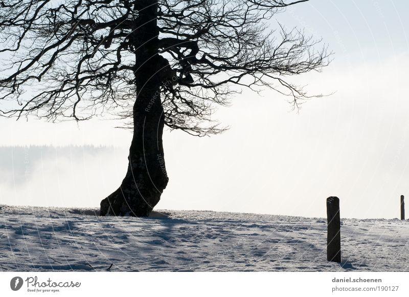 alle Winterbilder müssen raus !! Ferien & Urlaub & Reisen Ausflug Ferne Schnee Winterurlaub Luft Wolken Klima Wetter Schönes Wetter Eis Frost Baum blau weiß
