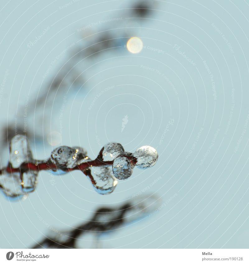 Die gläsernen Bäume von Mandala IV Umwelt Natur Pflanze Himmel Winter Klima Klimawandel Wetter Eis Frost Ast frieren glänzend außergewöhnlich kalt natürlich