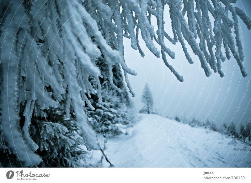 Dreadlock Holiday Natur Himmel Winter Eis Frost Schnee Baum Wald Berge u. Gebirge Wege & Pfade kalt blau Freizeit & Hobby Schneelandschaft Ast Nadelwald