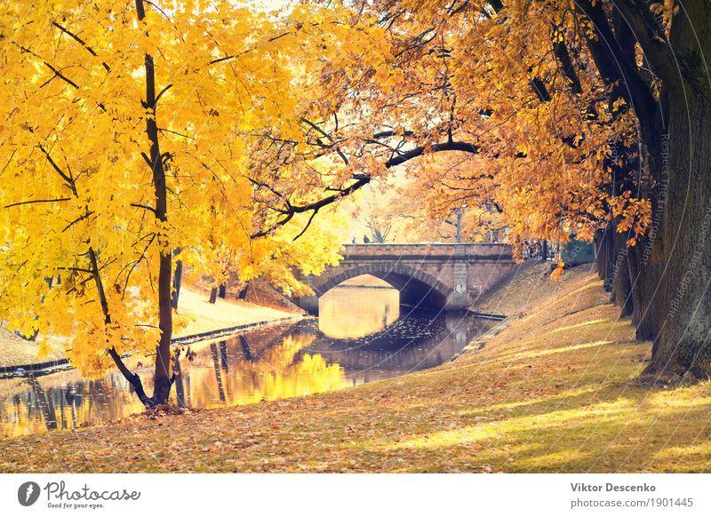Riga City Canal und Brücke schön Sonne Garten Natur Landschaft Herbst Baum Blatt Park Wald Ostsee Straße natürlich gelb gold grün Farbe zentral fallen