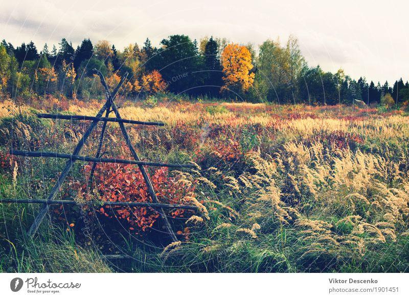 Ein Feld in der ländlichen Landschaft schön Sommer Sonne Umwelt Natur Pflanze Herbst Baum Gras Blatt Park Wiese Wald Ostsee Wachstum hell natürlich gelb gold