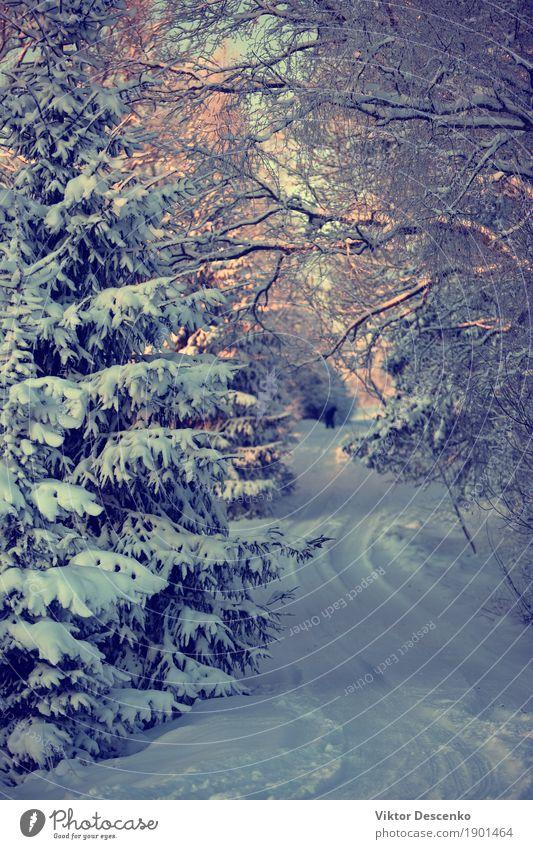 Die Straße durch den Schnee im Winter schön Ausflug Natur Landschaft Himmel Wetter Baum Park Wald Ostsee Wege & Pfade frieren Coolness natürlich blau weiß Szene