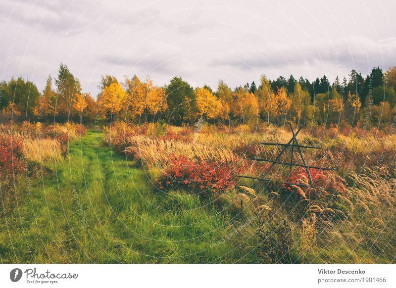Natur Pflanze Sommer grün schön Sonne Baum Landschaft rot Blatt Wald Umwelt gelb Herbst Wiese natürlich