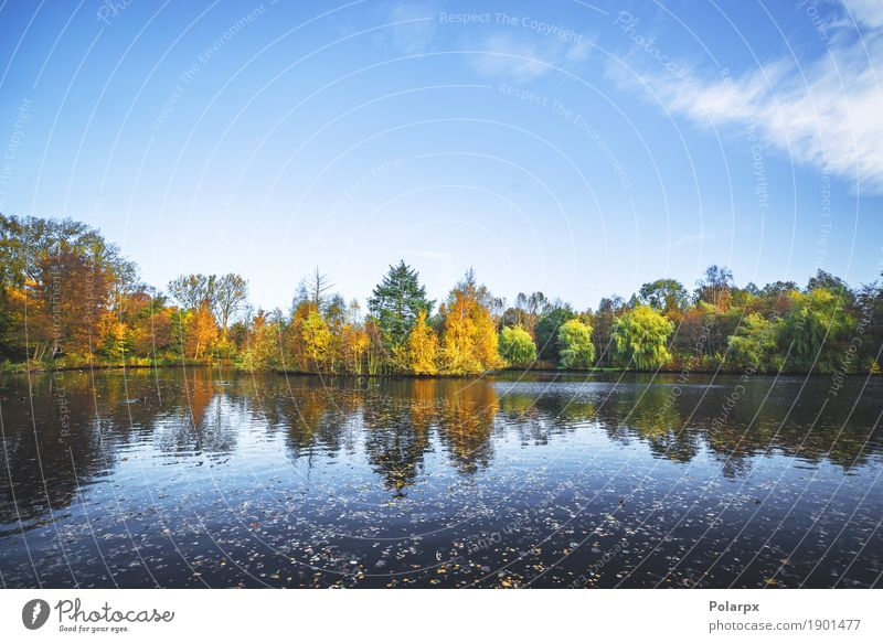 Herbstlandschaft mit einem See und Bäumen schön Ferien & Urlaub & Reisen Umwelt Natur Landschaft Himmel Baum Blatt Park Wald Teich Fluss hell braun gelb gold