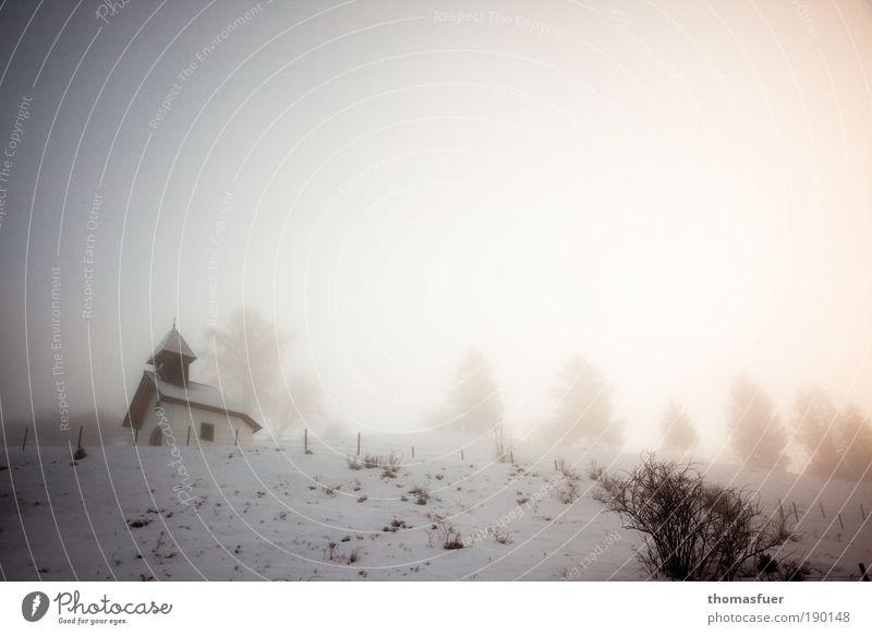 Frostgeister Himmel weiß Ferien & Urlaub & Reisen Winter Einsamkeit kalt Schnee Berge u. Gebirge Umwelt Landschaft Wetter braun Eis Nebel Klima Perspektive