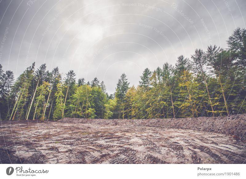 Natur Pflanze Farbe grün schön Baum Landschaft Blatt Wald Straße Umwelt gelb Herbst Wege & Pfade natürlich hell