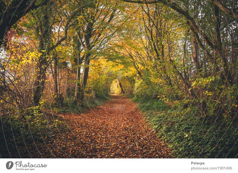 Märchenwald im Herbst schön Umwelt Natur Landschaft Baum Blatt Park Wald Straße Wege & Pfade hell natürlich gelb gold grün rot Farbe fallen Jahreszeiten Holz