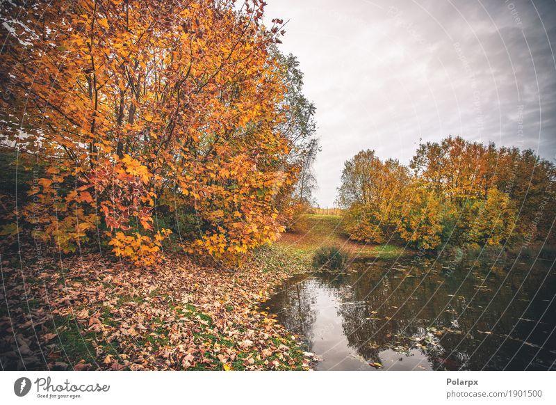 Bunte Bäume durch einen kleinen Teich im Fall Himmel Natur Ferien & Urlaub & Reisen Farbe grün schön Baum Landschaft rot Blatt Wald Umwelt gelb Herbst See braun