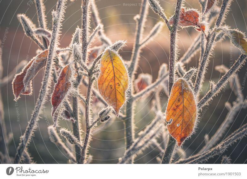Bunte Blätter mit Frost bedeckt schön Winter Schnee Garten Umwelt Natur Landschaft Pflanze Herbst Wetter Baum Blatt Park frieren Wachstum Coolness hell kalt
