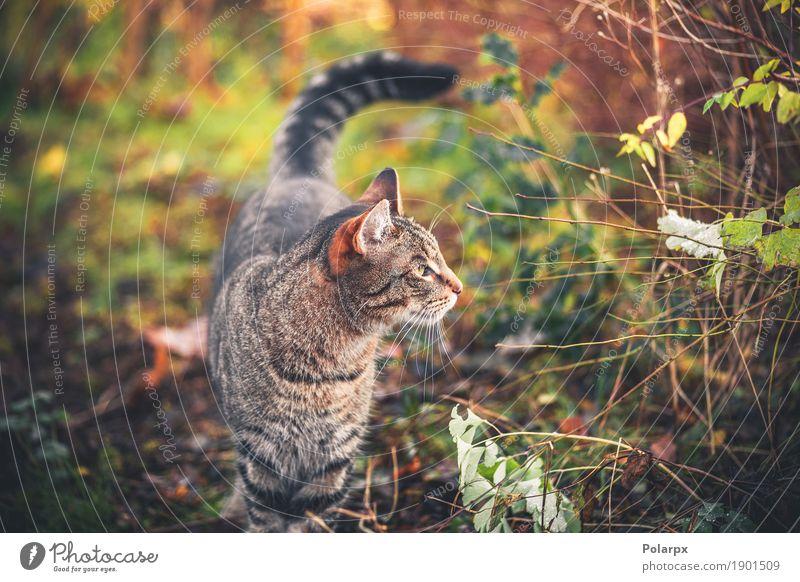 Katze, die morgens in einen Garten geht schön Gesicht Erholung Spielen Natur Tier Gras Pelzmantel Haustier klein niedlich grau grün Einsamkeit Katzenbaby jung