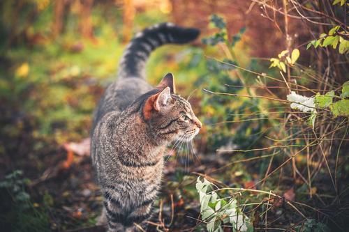 Katze Natur grün schön Erholung Einsamkeit Tier Gesicht Gras Spielen klein Garten grau niedlich Jahreszeiten Körperhaltung