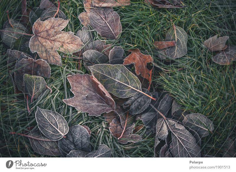 Gefrorene Blätter von verschiedenen Bäumen Natur Pflanze Farbe grün schön weiß Blatt Winter gelb Herbst Wiese natürlich Gras Schnee Garten braun