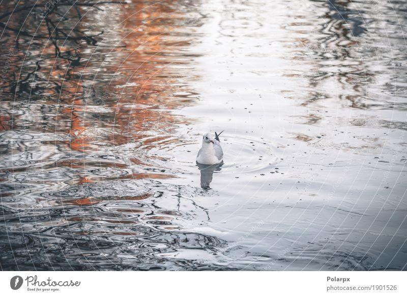Wilder Vogel im kalten Wasser morgens schön Meer Winter Natur Landschaft Tier Himmel Herbst Wetter Park Küste See Bewegung fliegen frieren stehen Coolness