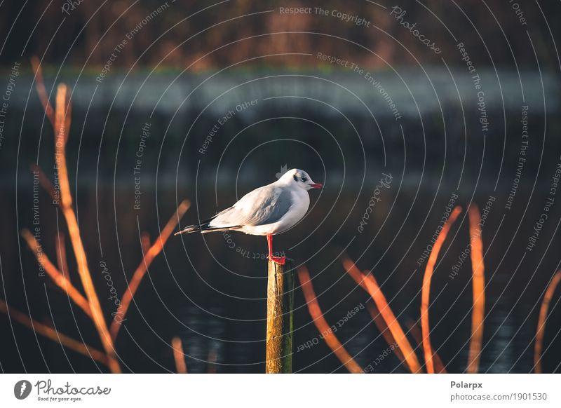 Seemöwe auf einem hölzernen Beitrag durch das Wasser schön Körper Ferien & Urlaub & Reisen Meer Mann Erwachsene Natur Tier Himmel Ostsee Hafen Vogel Flügel Holz