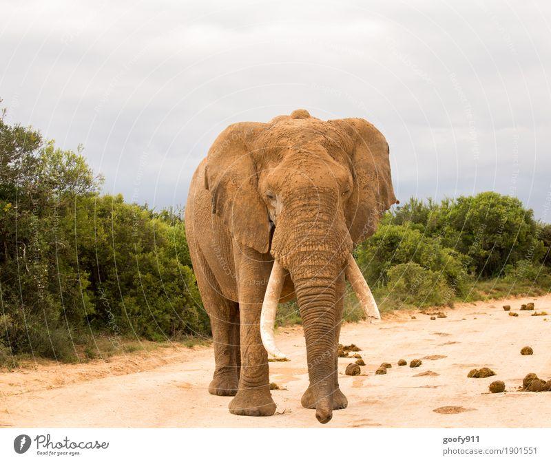 Obacht!!! Abenteuer Safari Expedition Umwelt Natur Landschaft Urelemente Erde Sand Himmel Wolken Frühling Herbst Wärme Pflanze Baum Sträucher Südafrika Afrika
