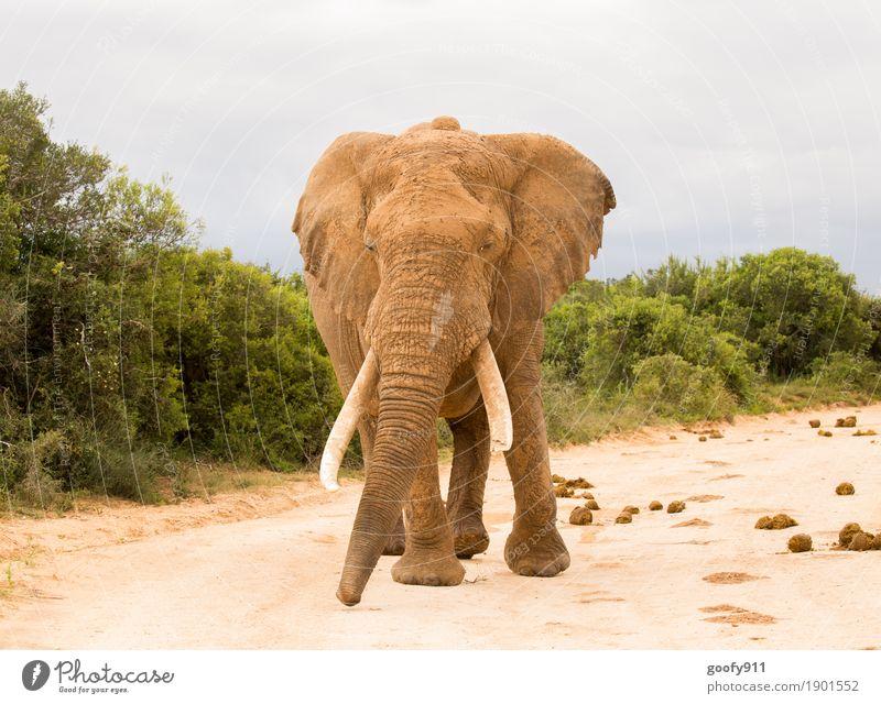 Komm mir nicht zu nahe!!! Umwelt Natur Landschaft Erde Sand Himmel Wolken Sonne Frühling Sommer Herbst Wärme Dürre Pflanze Baum Sträucher Afrika Tier Wildtier